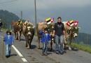 Herbsttreffen Amicale Peugeot Veteranen Club Suisse - CH - FL - AT, 2008 (18)